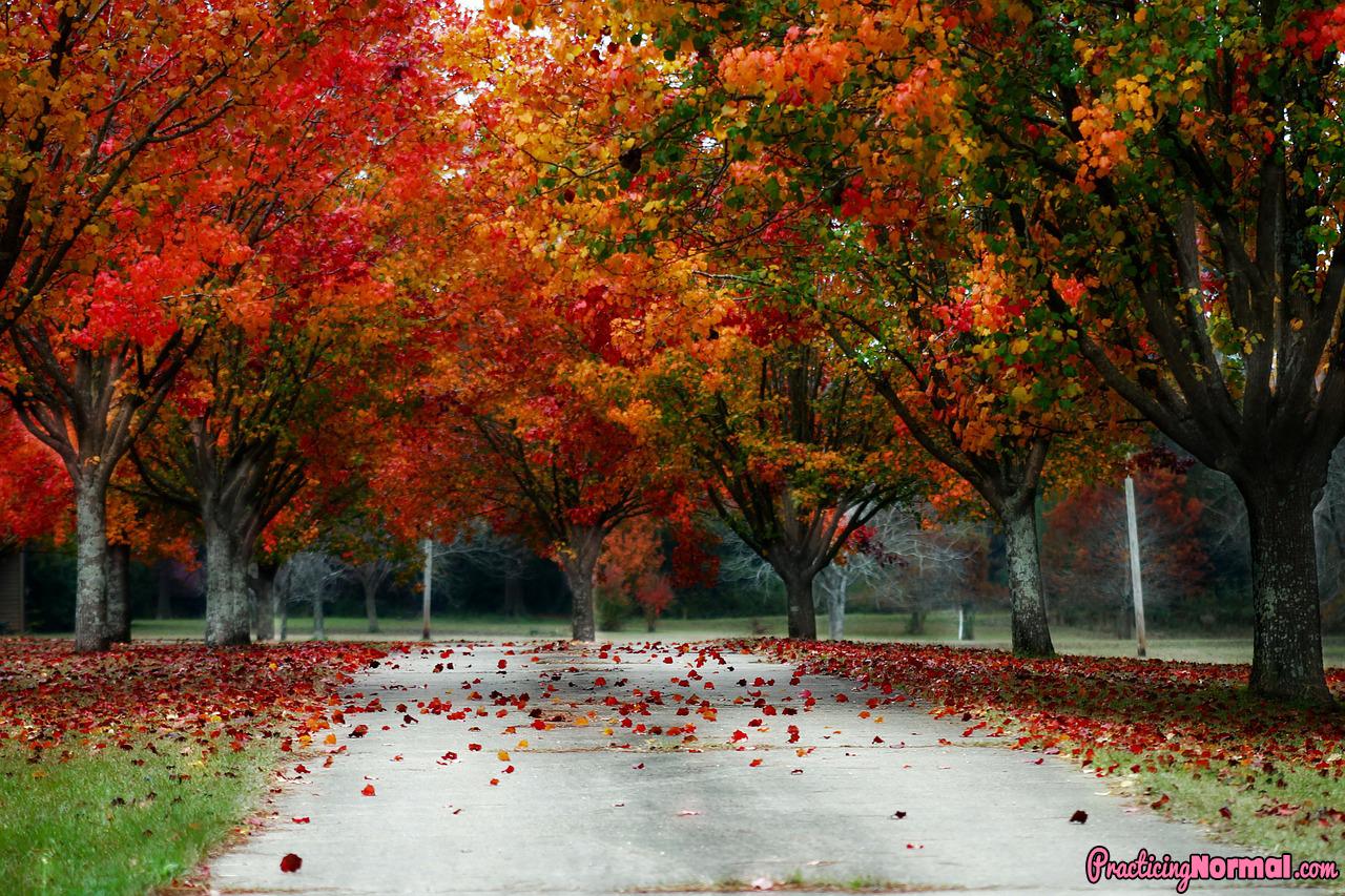 trees fall nature scenic beautiful autumn colorful season colors